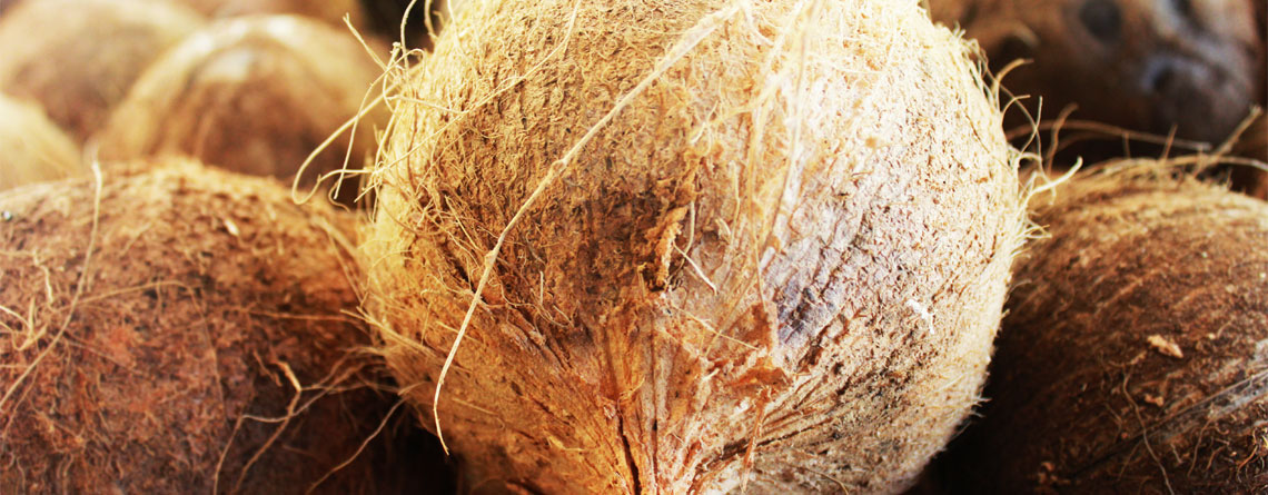 Raw coconuts for virgin coconut oil