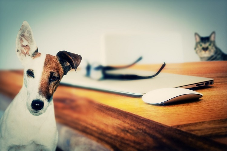 virgin coconut oil for cats, dogs and pets